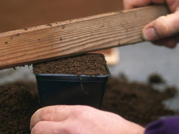 How to Sow Seeds Indoors