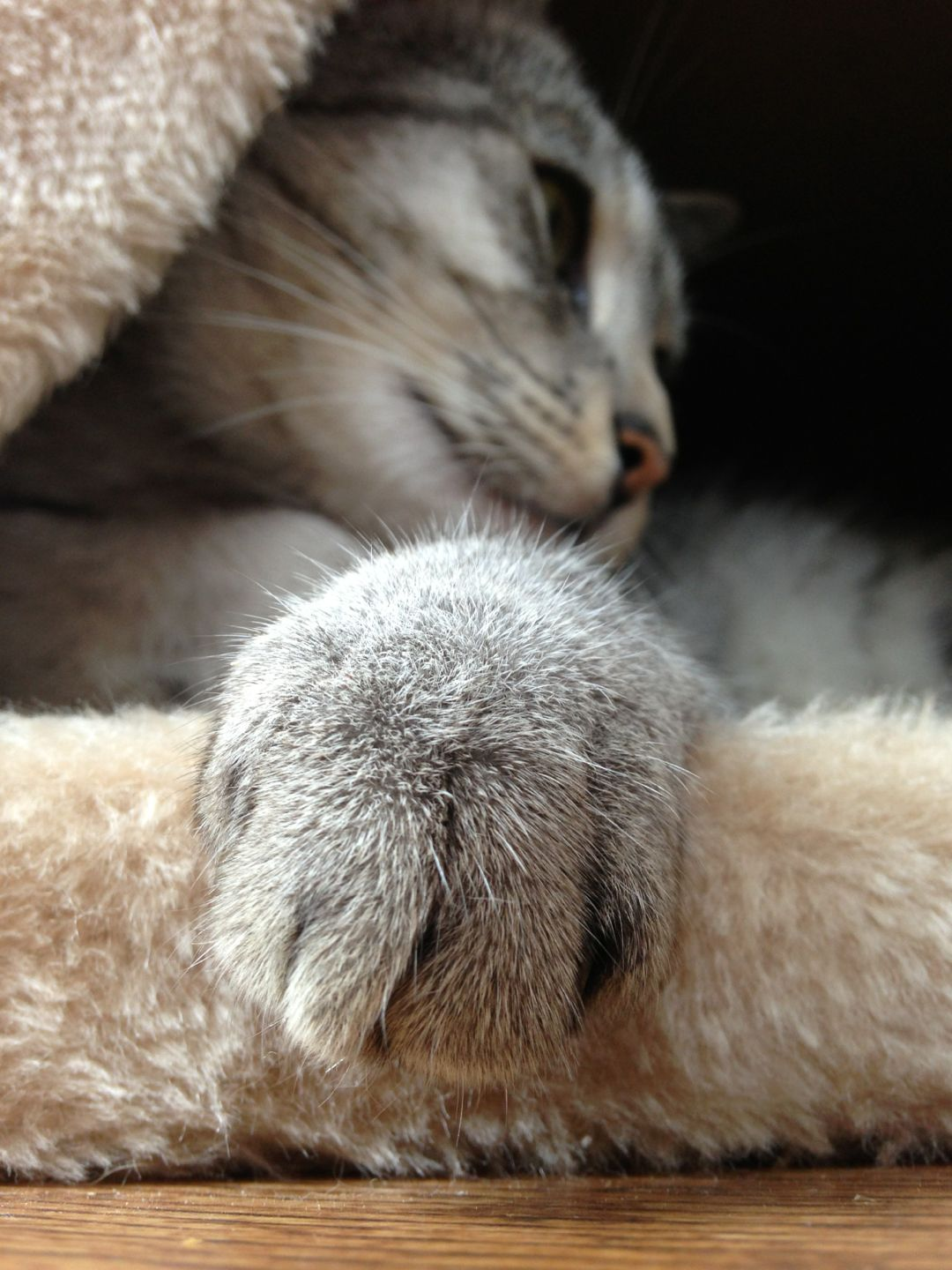 She Keeps Her Claws Sharp Because She Knows A Purr May Not Always Be Enough Author Unknown Getting A Kitten Cat Paws Kitty