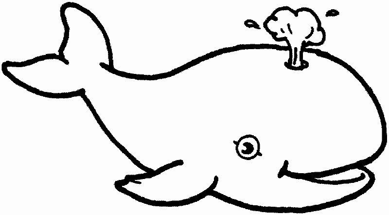 Blue Whale Coloring Page Unique Blue Whale Coloring Page Free Coloring Pages Whale Coloring Pages Shark Coloring Pages Animal Coloring Pages