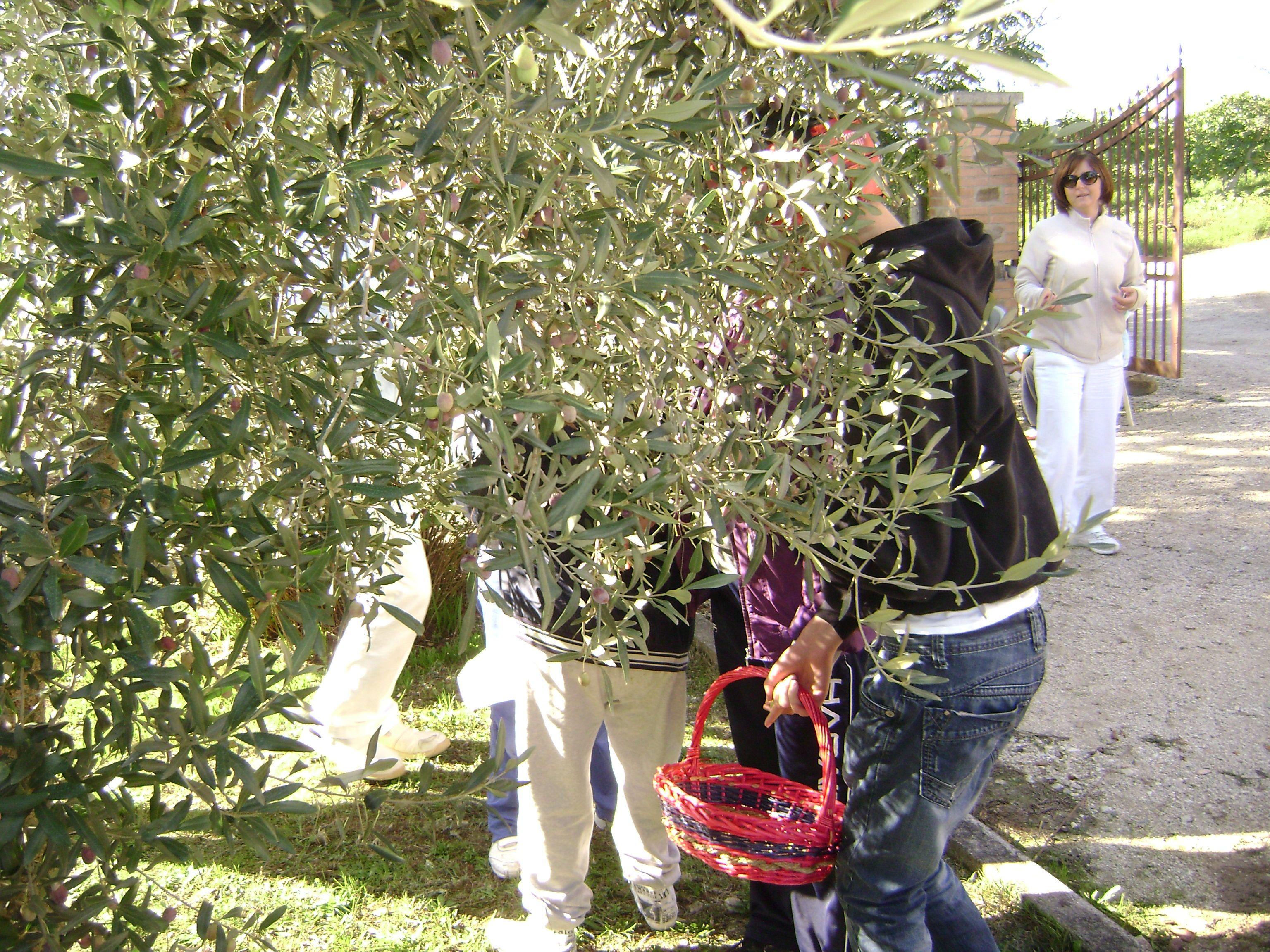 dietro le olive ci siamo noi!