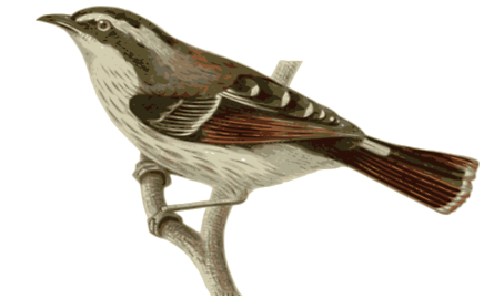 Que Mas Libre Que Un Avecita Bird Animals Bird Perch