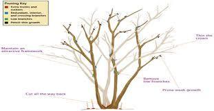 Trim Crepe Myrtle Branch Google Search When To Prune Azaleas Myrtle Tree Pruning Crepe Myrtles