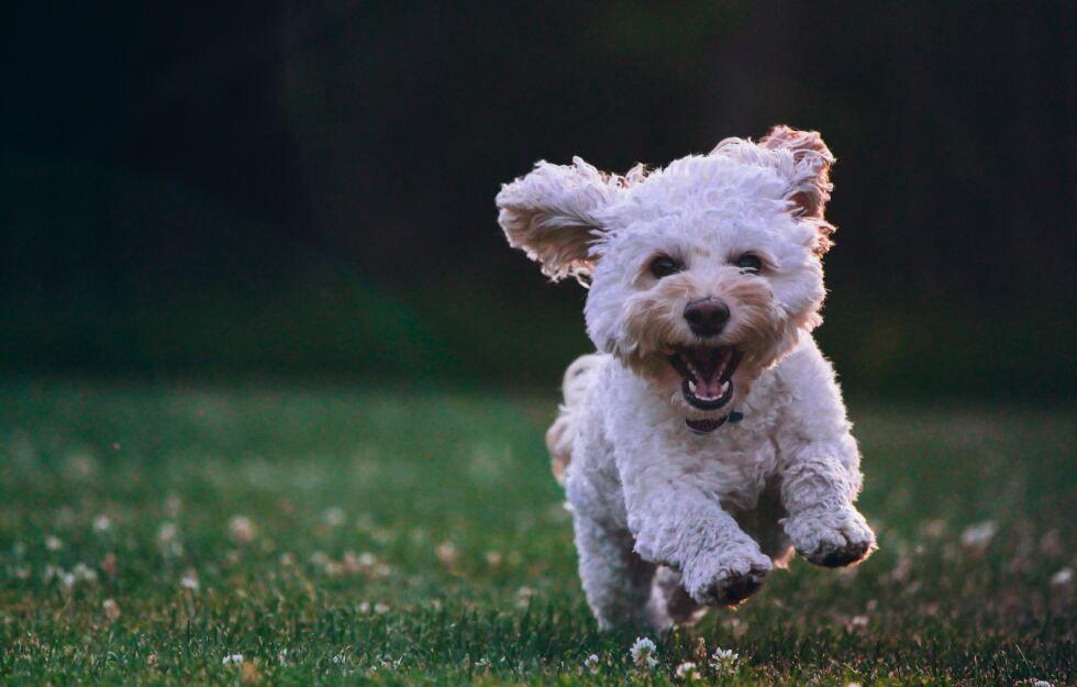 Menschliches Hundealter Berechnen So Geht S Hunde Susseste Haustiere Welpenbilder