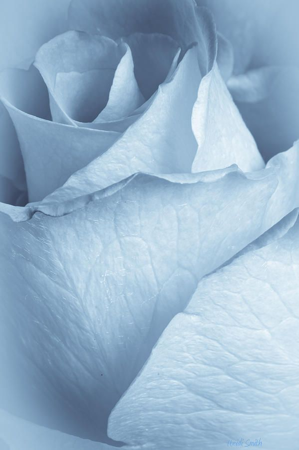 Soft Blue by Heidi Smith #blueaesthetic