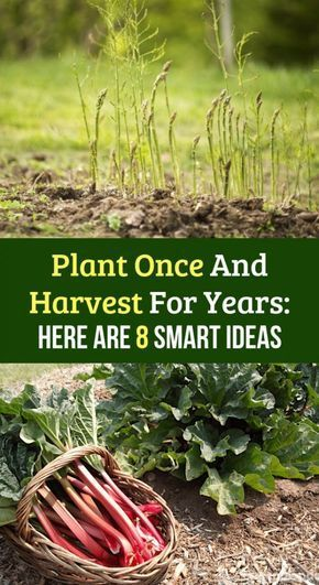 Plant Once And Harvest For Years: Here Are 8 Smart Ideas