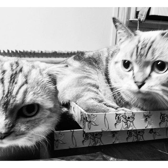 Baileys and Oatmeal #cats #purr #catsofinstagram #pets #BW  #blackandwhite #blancoynegro #blackandwhitephotography