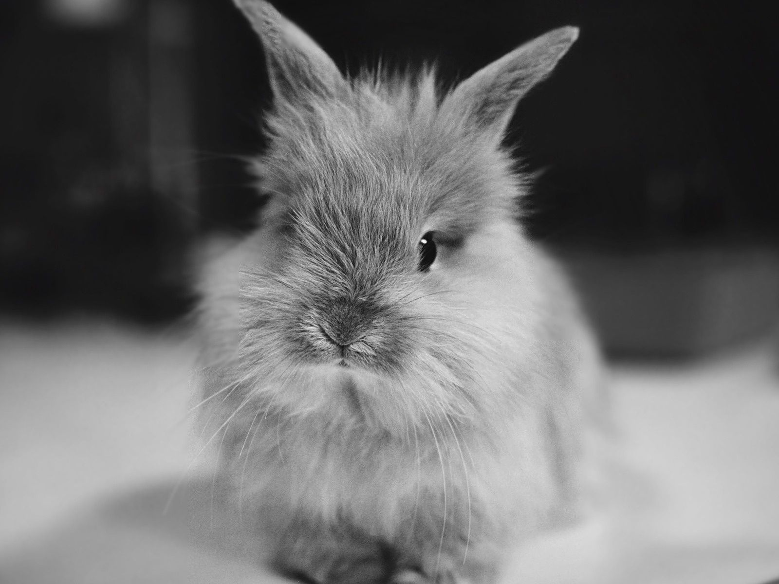 Oh man this might be the cutest bunny ever! Rabbit