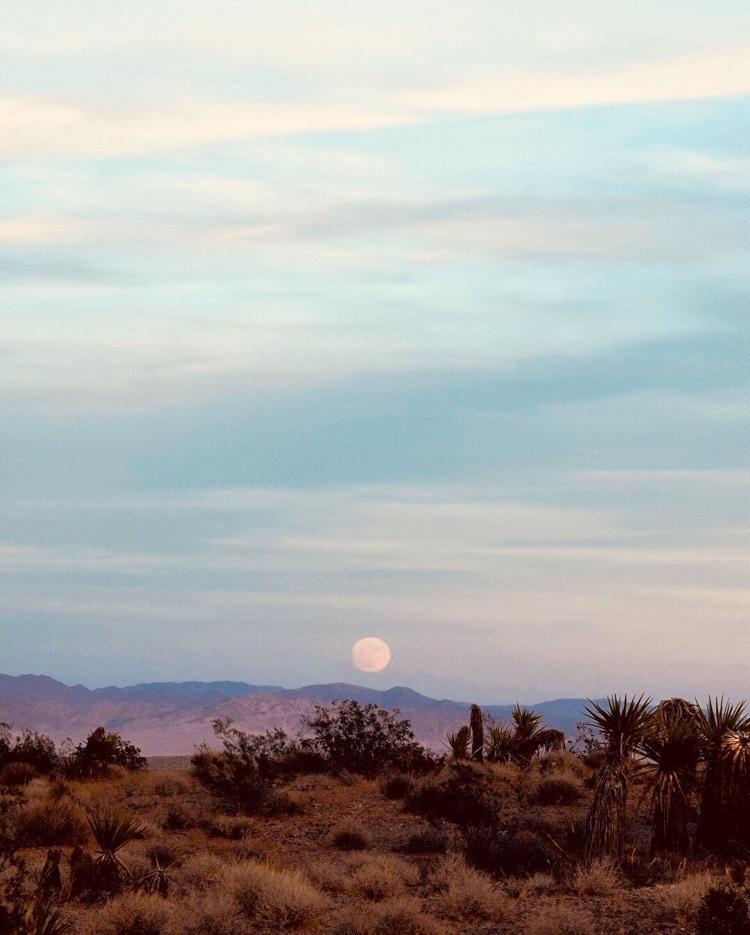 desert dream • @thoughtfulness #desertlife