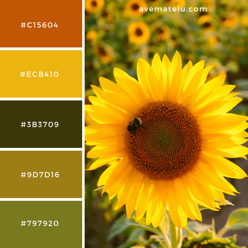 Yellow Sunflower Color Palette 23 Color Psychology Sunflower Colors Colours That Go Together