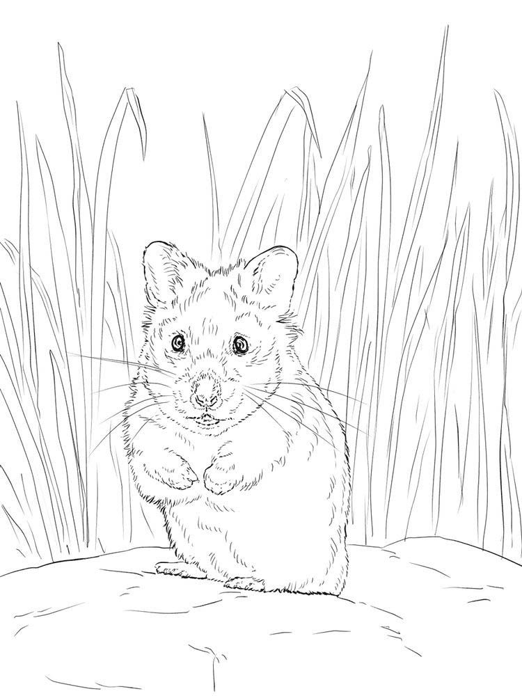 Cute Hamster Coloring Pages Printable Di 2020