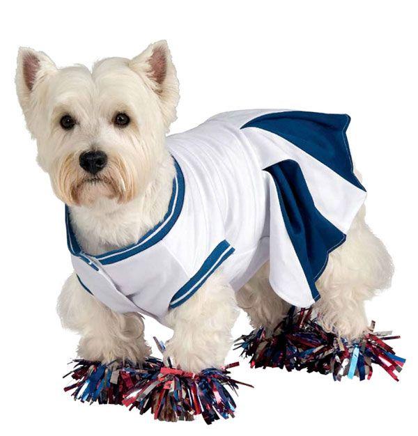 Disfraces para perros: Porrista