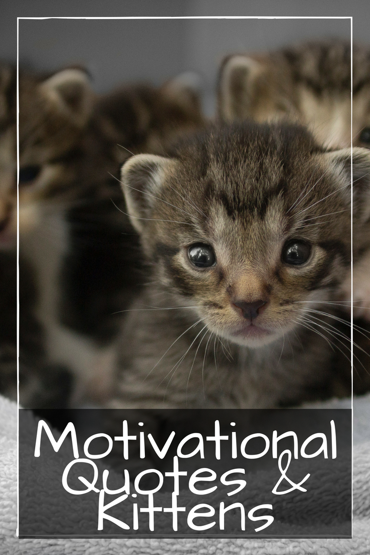 Motivational Kitten : motivational, kitten, Motivational, Quotes, Kittens, Idea's, Whose, Come., Legacy, Consulting, Solutions, Newborn, Kittens,, Cutest,