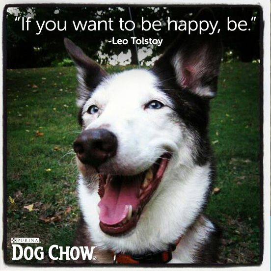 Dog Quote Smile Happy Just Be Dog Quotes Cute Animal