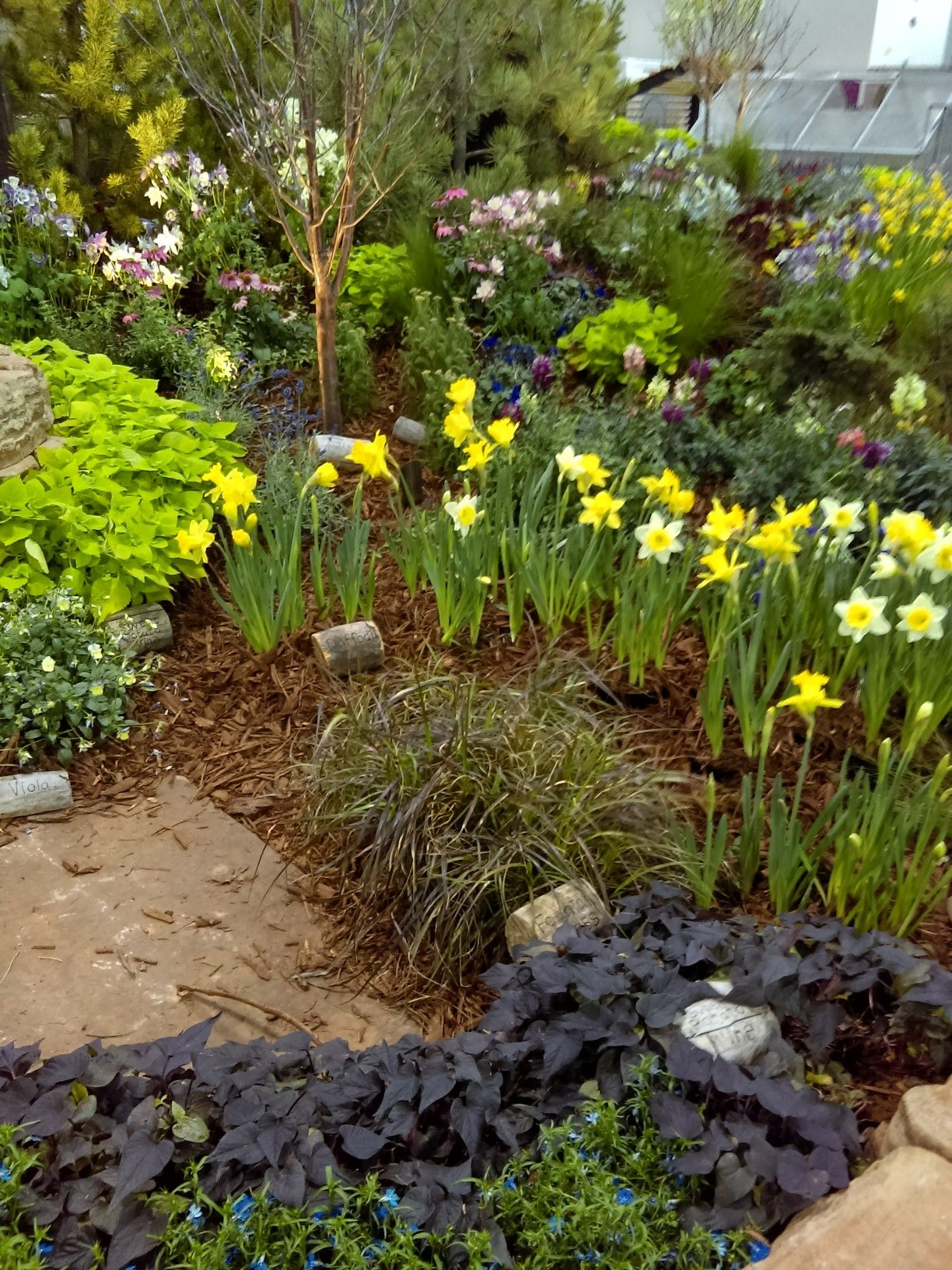 Beautiful Flowers At The Colorado Home And Garden Show | Places To .
