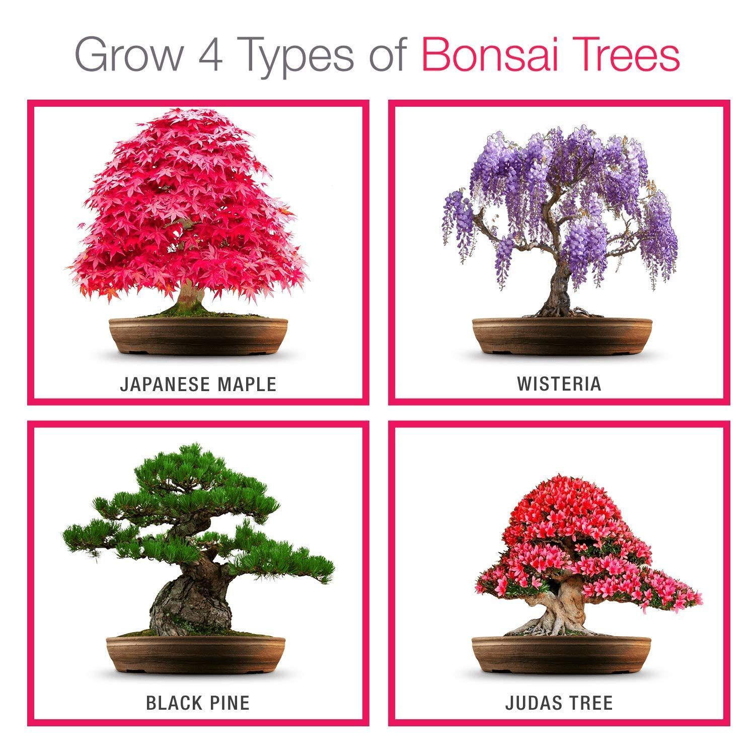 Pin On Bonsai Trees