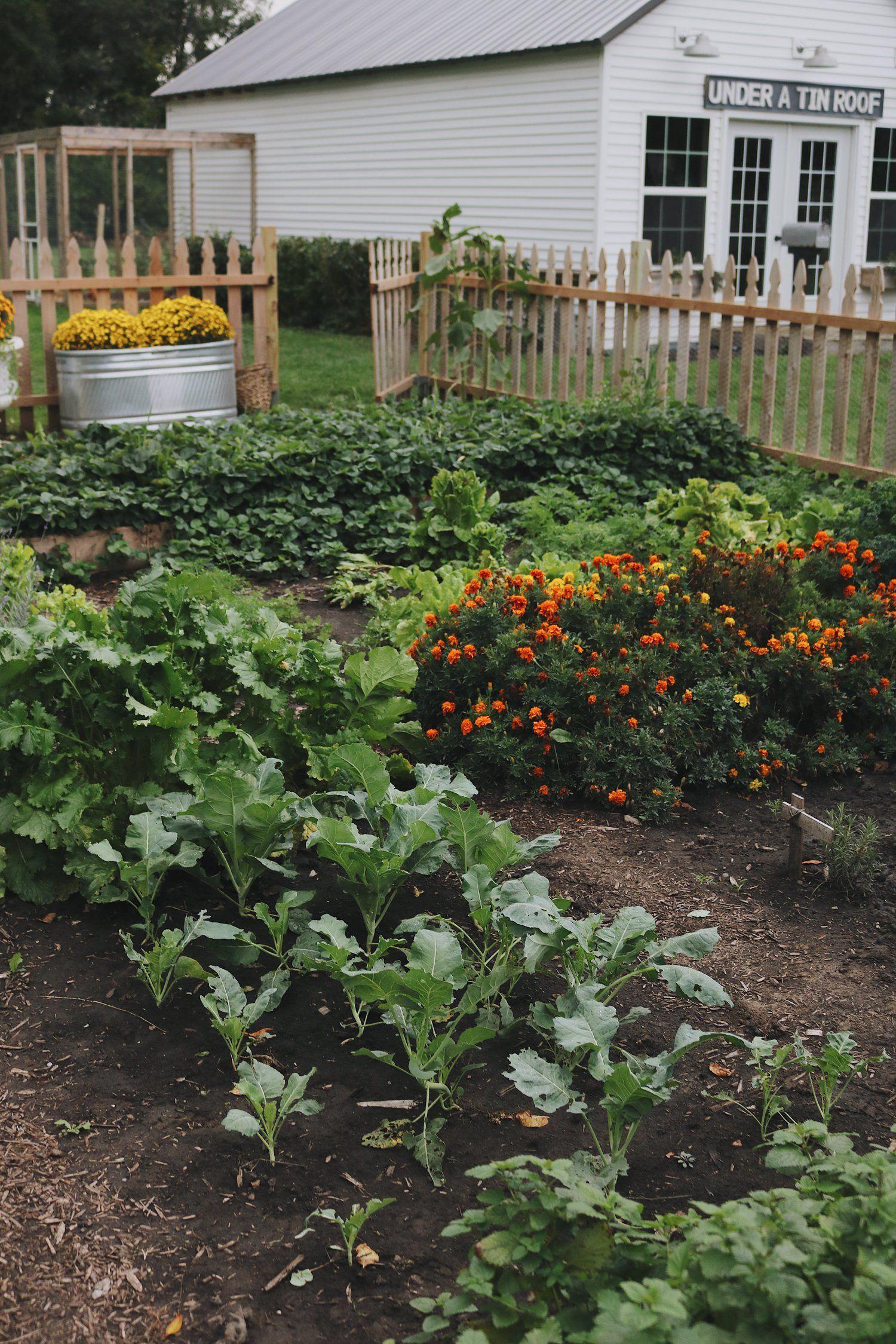 Homestead Update Expanding The Garden Darker Days And A Big Announcement Garden Backyard Farming Homesteading