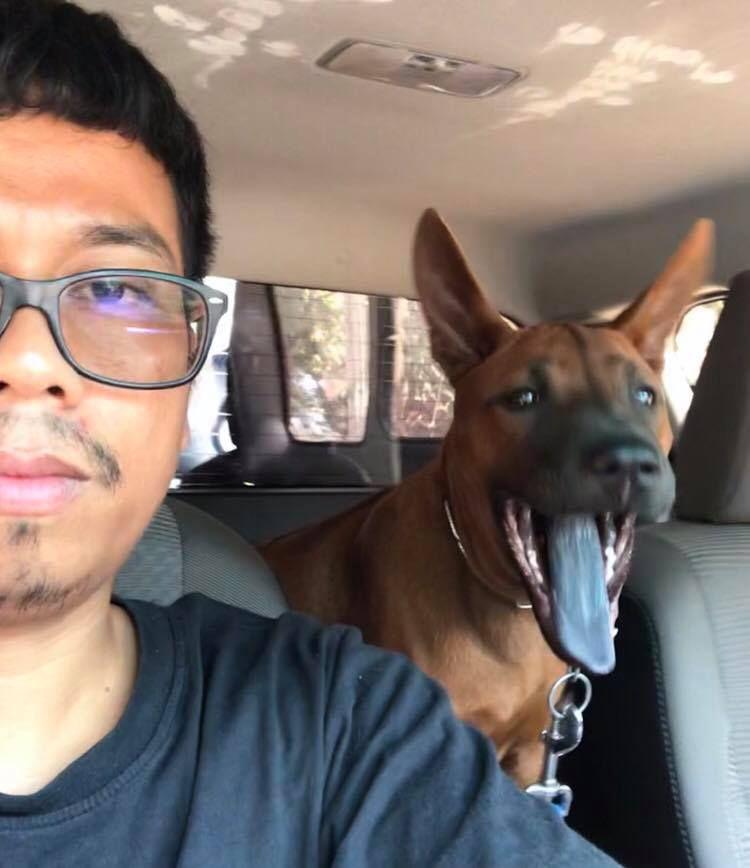 แค ได ย นว าจะพาไปเด นเล นในเม อง แหม ห ต งเลยนะ ไทยหล งอาน หมาไทยหล งอาน Thairidgeback Trd Trdfamily Pets Dogs And Puppies Cute Animals