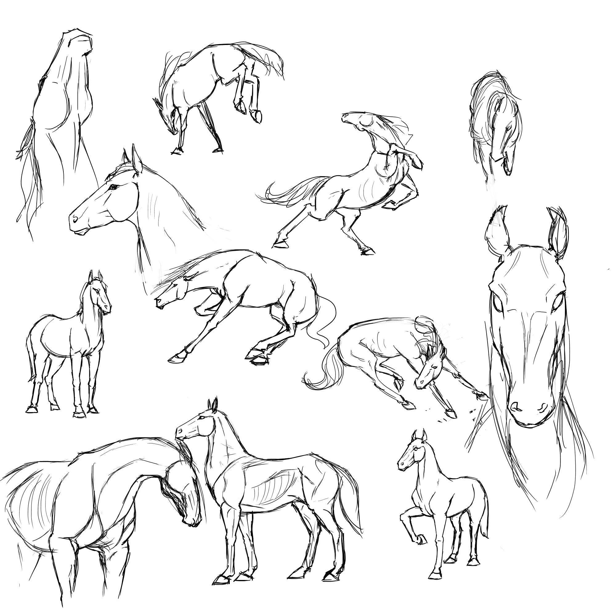 Horse Stu S By Rasnovstables D558aw6