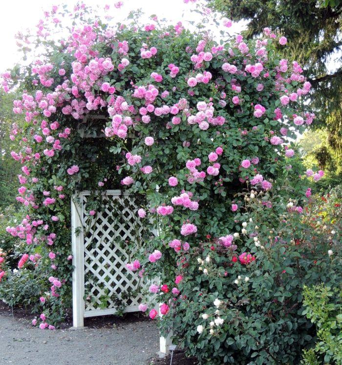 rosenbogen mit kletterrosen ein genuss f rs auge und die seele blumen und pflanzen. Black Bedroom Furniture Sets. Home Design Ideas