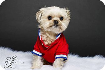 Pin By Patricia Quiggle On Dogs Shih Tzu Yorkie Yorkshire Terrier