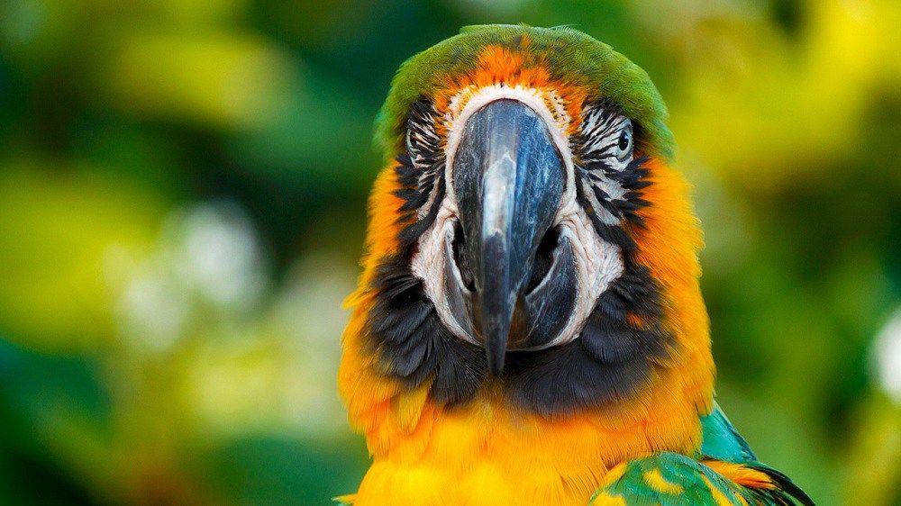 Als een exotische vlinder met gespreide vleugels ligt het Antilliaanse Guadeloupe te schitteren in de Caraïben. Deze creoolse parel springt in het oog dankzij haar kristalheldere turkooizen water, gastvrije bevolking, adembenemende natuur en prachtige resorts. Kan jij weerstaan aan een vakantie naar Guadeloupe? Wij richten onze zonnebril naar deze 5 tips!