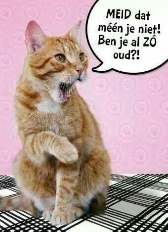 Afbeeldingsresultaat Voor Verjaardag Dame Met Katten Sentiments
