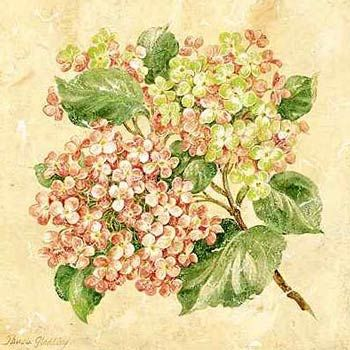 hydrangea botanical print - Google Search