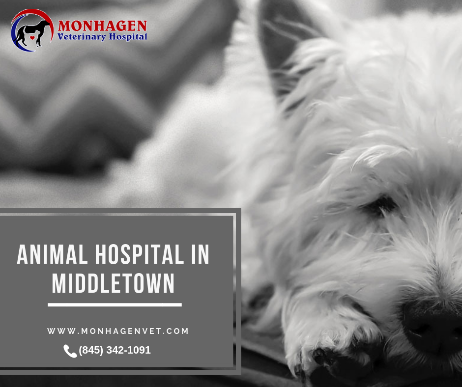Monhagen Veterinary Hospital Is The Top Rated Animal Hospital In