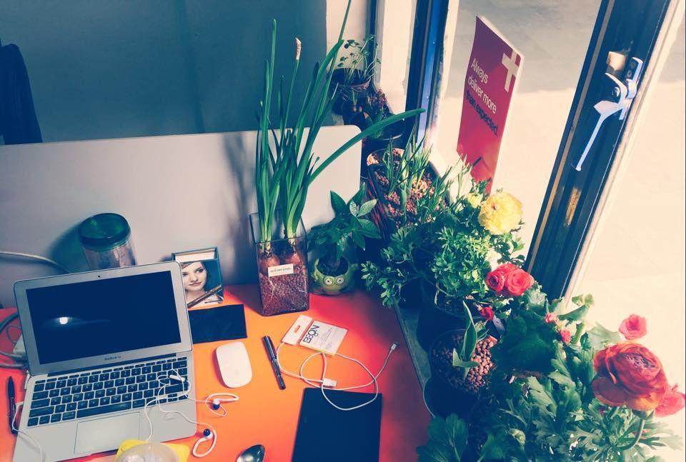 Gardenesia  Buy Plants Online India   Best Online Garden Store In India  Http:/