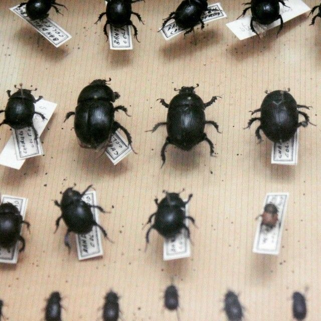 Small Homeinterior Ideas: Black Insects. A Small Part Of My Curiosity Treasures