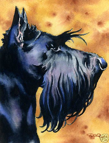SCOTTISH TERRIER Watercolor 8 x 10 ART Print Signed by Artist DJR in Art   eBay