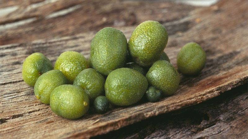 Desert Lime Citrus Glauca These Little Beauties Are About The Size Of A Grape And Bursting With An Intense Lime Flavou Lime Heirloom Vegetables Citrus Trees