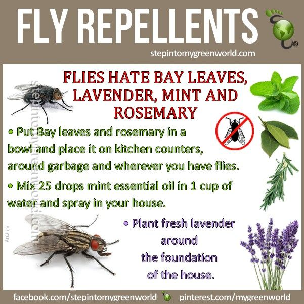 Home Remedy For Flies Homeveda Holistic Natural Fly Repellant