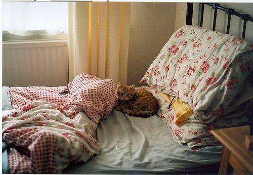 cute, kitten, bed