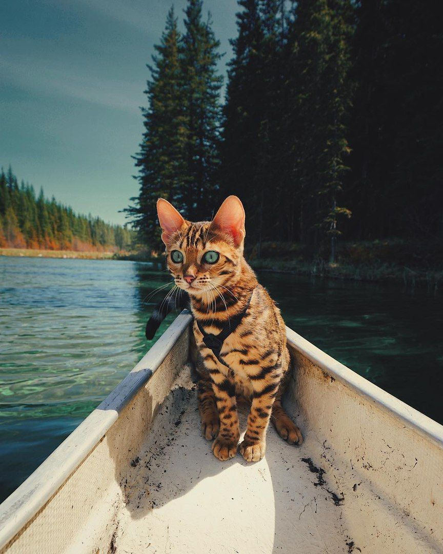 Beautiful pictures Cats, Adventure cat, Beautiful cats