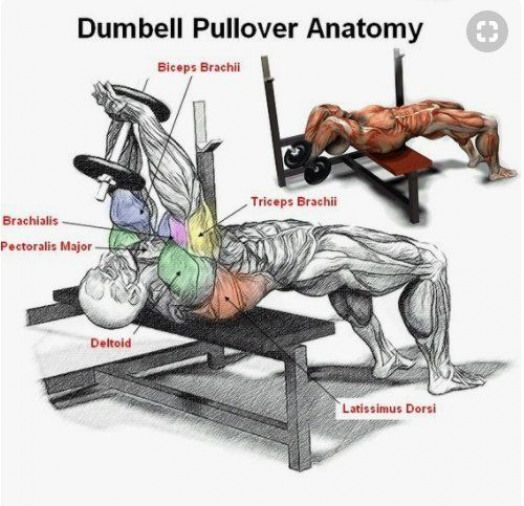 This has become one of my favorite compound exercises to use at the gym Its a simple exercise that can be done with a single dumbbell but it works almost your entire uppe...