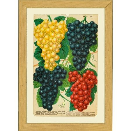 Grape Wall Decorations | pinned this Grapes Wall Art from the ...