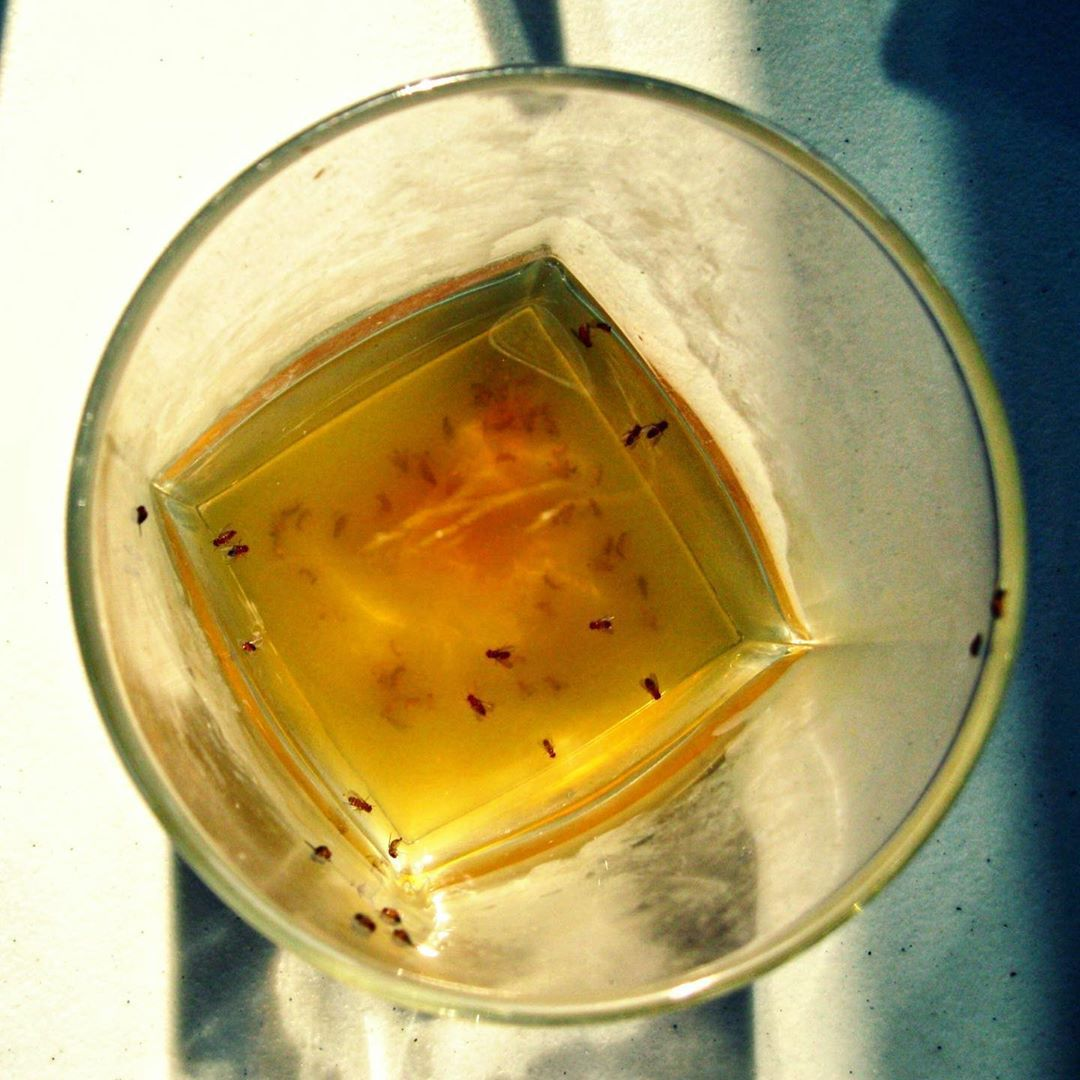 Here are the best ways to get rid of fruit flies fast see