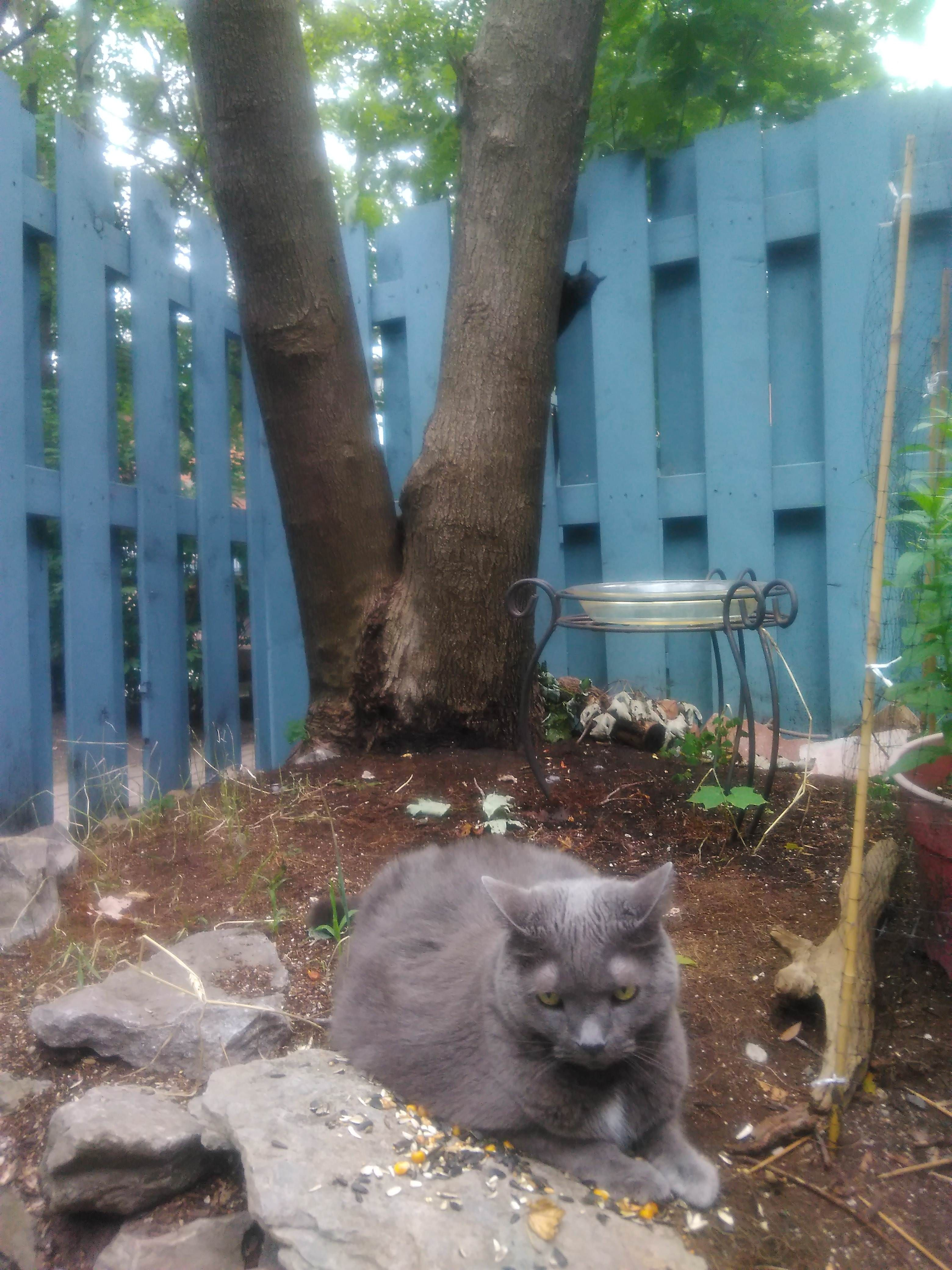 So my cats kind a passive aggressive jerk. http://ift.tt/2uoH3KH