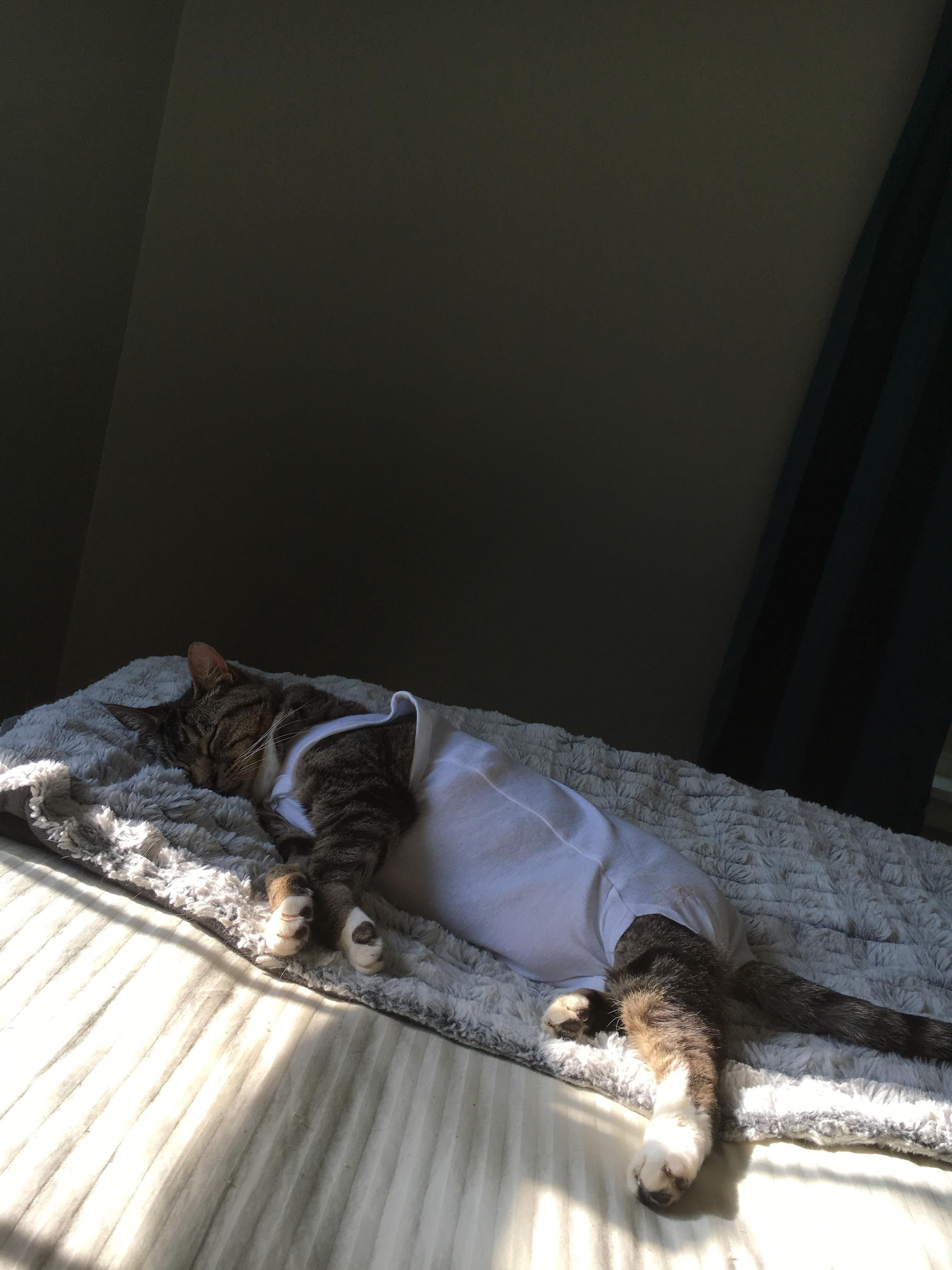 My Cat In A Onesie After Her Surgeryhttps I Redd It Iirjcuef9px01 Jpg Cats Youtube Cats Cat Sitting