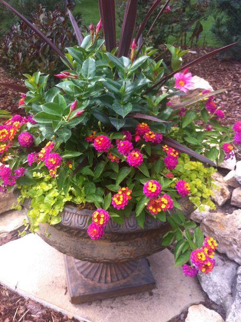 beautiful container plants Gardens and planters Pinterest - maceteros para jardin