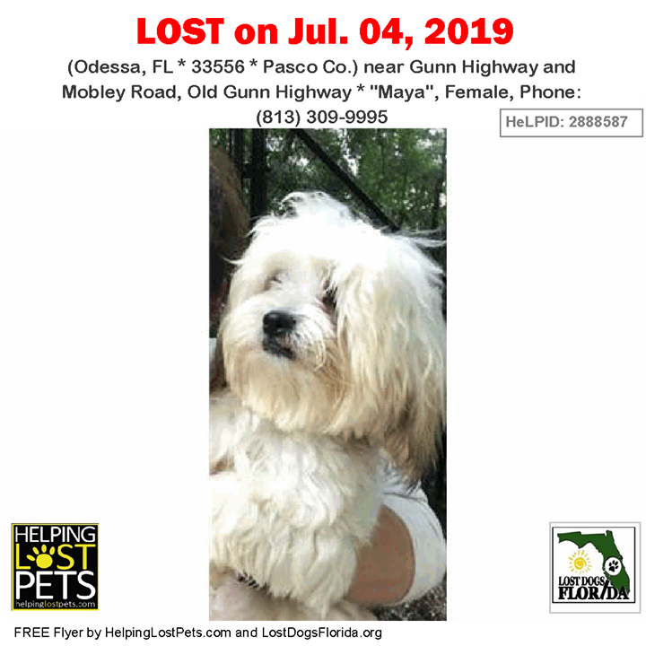 Have You Seen This Lost Dog Lostdog Maya Odessa Gunn Highway Mobley Road Old Gunn Highway Odessa Fl 33556 Pasco Co Losing A Dog Losing A Pet Dogs