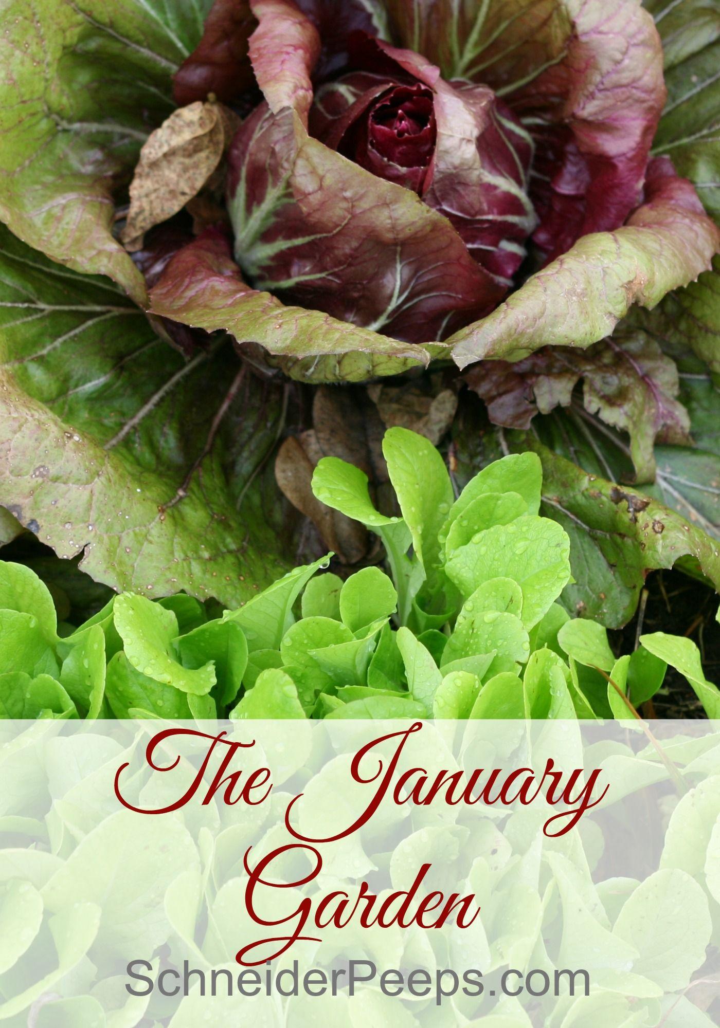 the january garden gardens homesteads and vegetable garden