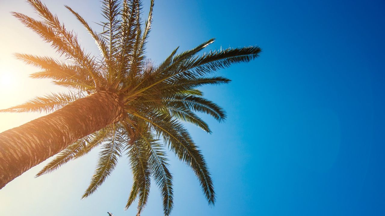 фотографии на рабочий экран пальмы своей сути