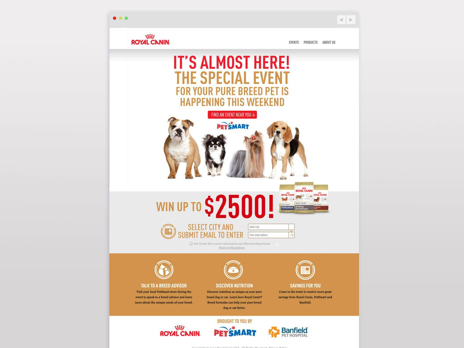 Image Result For Royal Canin Email Design Royal Canin Email