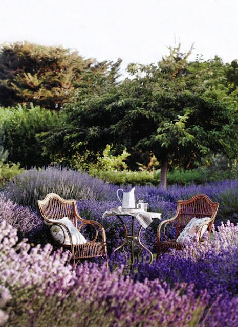 Lovely use of color and wild flowers to create an outdoor space