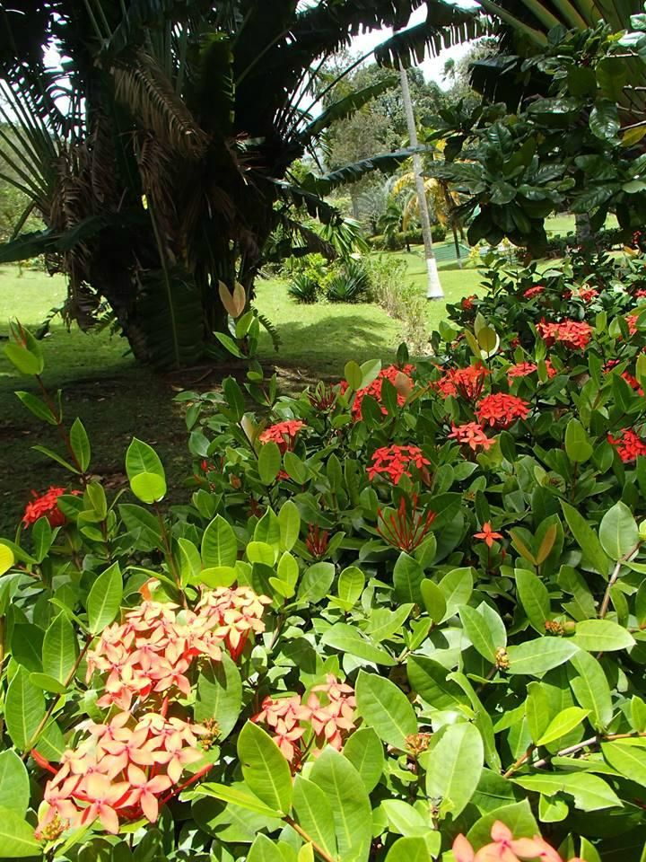 Botanical Gardens, Kingstown: The Botanical Garden of Saint Vincent is a 20-acre botanical garden located along the Leeward Highway, about 1 mile from Kingstown, the capital of St. Vincent and the Grenadines, south of The island of St. Vincent. Wikipedia
