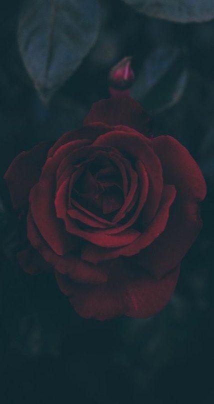 dark rose wallpaper iphone