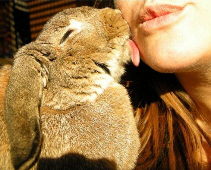 Картинка поцелуя прикол