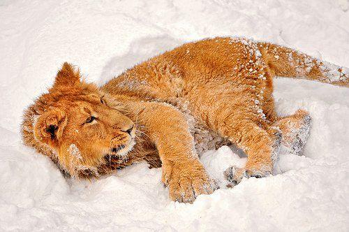 Snow Day Snow Animals Animals Beautiful Animals